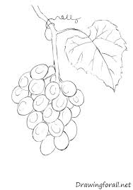 how to draw grapes drawingforall net