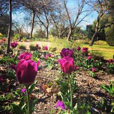 spring almost here see the most beautiful gardens in texas