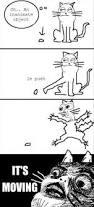 20 of the best examples of cat logic bored panda
