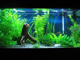 chic aquarium decor ideas 46 aquarium baby room ideas home