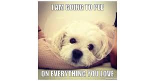 Animal Memes - silly animal memes popsugar pets