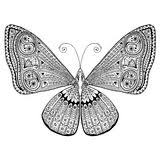coloring page of a beautiful butterfly stock image