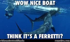 Nice Boat Meme - the misunderstood shark meme comediva