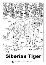 coloring pages of tigers endangered animals colouring pages