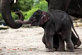 cute baby elephant wallpaper desktop wallpapers background