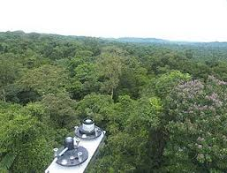 canopy amazon a new species in the amazon rain forest scientists berkeley lab