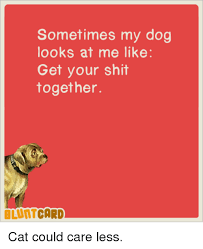 Get Your Shit Together Meme - sometimes my dog looks at me like get your shit together bluntcard
