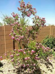 native utah plants non native and a few native mojave desert flora desert road