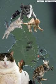 cat island cat island japan animals zone
