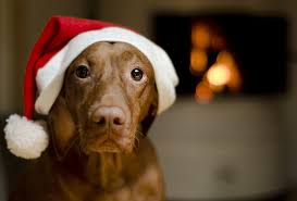 pet christmas christmas safety pet articles pet valu pet store pet food