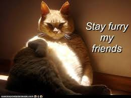Stay Thirsty My Friends Meme - animal capshunz the most interesting man in the world funny