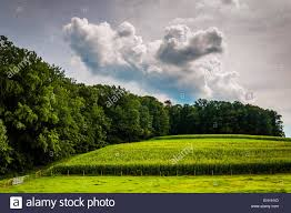 corn field and trees in rural york county pennsylvania stock photo