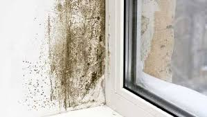How To Frost A Bathroom Window How To Prevent Mold 9 Tips Mnn Mother Nature Network