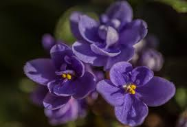flower sunlight spring purple desktop wallpaper widescreen