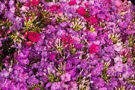 Wholesale Flowers Near Me You Don U0027t Bring Me Flowers Anymore U2013 Qtkitchen