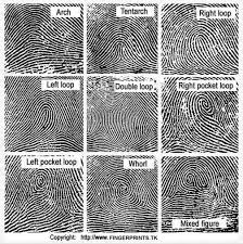 pattern classification projects fingerprint types google search true crime and oddities
