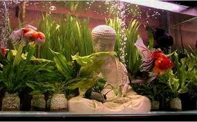 nevada goldfish goldfish culture in buddhism and taoism