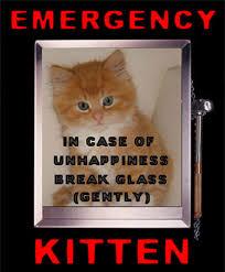 Good Luck Cat Meme - good luck cat meme ug99