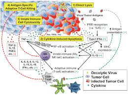 Cell Reproduction Concept Map Answers Viruses Free Full Text To Infection And Beyond The Multi