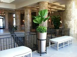 eilan hotel plant interscapes indoor office plants