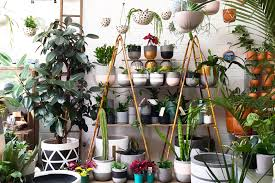 best plants for air quality best indoor plants guaranteed to improve air quality at home