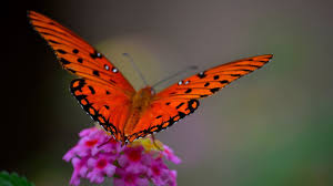 insects flower butterfly macro firefly insect wallpaper insects