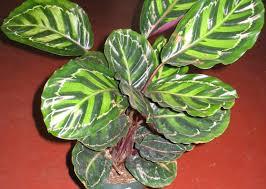 indoor palm plant indoor tropical plants horrible indoor pool tropical