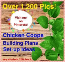 Backyard Chickens Magazine Articles For Chicken Keepers Tbn Ranch Chicken Keeping