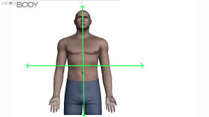 Directional Terms Human Anatomy Directional Terms Lessons Tes Teach