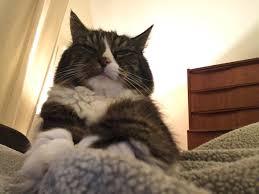 why my cat is sad mysadcat twitter