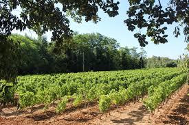 chambre agriculture du var the six vineyards of st antonin du var elizabeth gabay mw