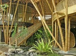 bambus design die besten 25 bamboo ideen auf bambus design