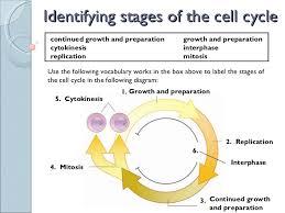 sci 9 lesson 2 feb 23 ch 5 1 mitosis