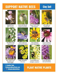 new england native plants plan a pollinator pocket garden tinkers creek watershed partners