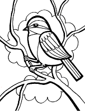 coloring pages books birds free quiz