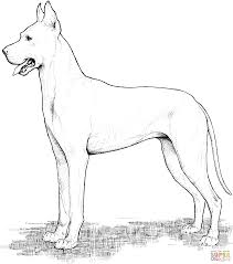 great dane coloring page free printable coloring pages