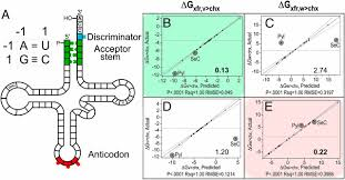 transfert de si e social sci trna acceptor stem and anticodon bases form independent codes