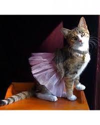 Kitten Halloween Costumes Pet 28 Halloween Pets Images Animals Pet Costumes