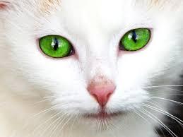 cute babie eyes wallpapers kitten wallpapers free download