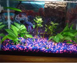 decoration delightful colorful fish tank for home interior