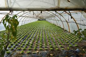 modern agriculture farm in salyan purbelinews net