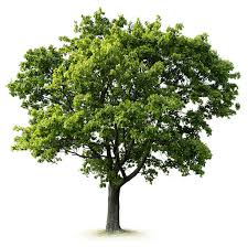 royalty free tree pictures images and stock photos istock