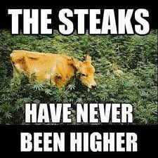 Funny Cow Memes - very funny cow memes graphic wishmeme