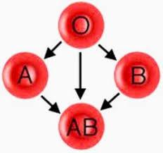 Serum Tes Golongan Darah tes golongan darah dengan serum