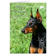 doberman mothers day greeting cards zazzle