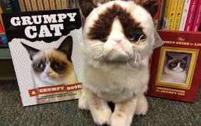 Grumpy Cat Has Died Youtube - 20 pets that make millions for their owners huffpost