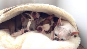 how to make a cozy cave dog bed diy ideas of cozy cave dog bed