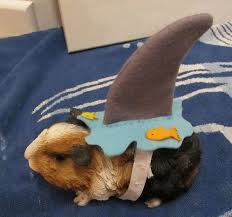 Cute Dog Halloween Costumes 116 Moore Pets Images Animals Cat Stuff