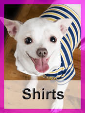 chihuahua sweaters clothes