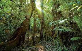 Plants In The Tropical Rain Forest - rainforests facts the nature conservancy